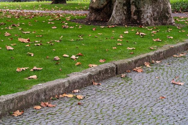 Folhas de bordo caídas na grama e pedras de pavimentação em um parque da cidade