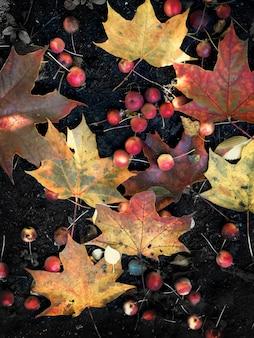Folhas de bordo coloridas e maçãs vermelhas