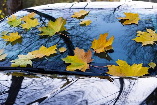 Folhas de bordo de outono amarelas mentem no para-brisa de um carro preto em um belo parque.