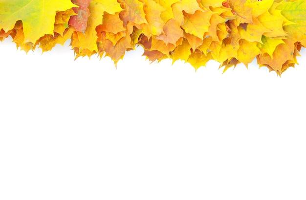 Folhas de bordo de outono isoladas em um branco