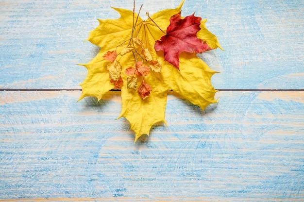 Folhas de bordo de outono secas vermelhas e amarelas e galhos de outono em uma mesa de madeira azul ou plano de fundo. materiais de outono para a criatividade e o artesanato das crianças. espaço para texto