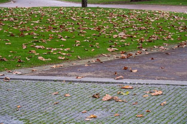 Folhas de bordo no gramado e na calçada de um parque da cidade