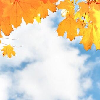 Folhas de bordo vermelho outono no fundo do céu azul