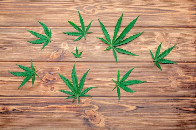 Folhas de cânhamo verde de ganja de erva daninha em fundo de madeira marrom escuro. folha de cannabis. a erva daninha legaliza o conceito de drogas de fumar. vista do topo. planta de maconha medicinal cannabis sativa.