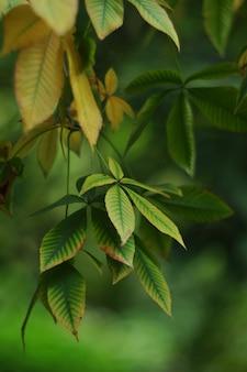 Folhas de castanha sobre um fundo desfocado verde