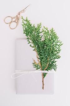 Folhas de cedro amarrado com pacote e tesoura isolado no fundo branco