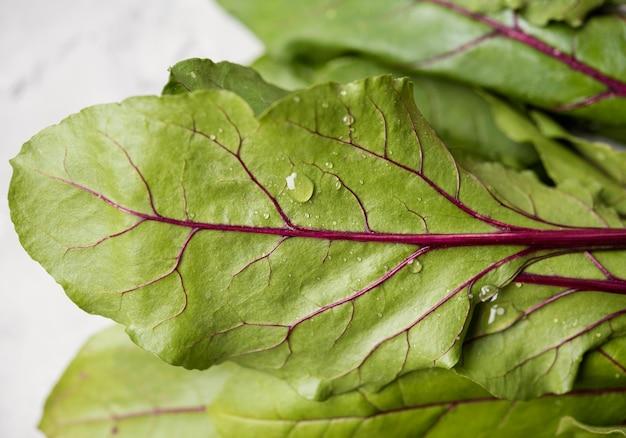 Folhas de close-up de acelga fresca