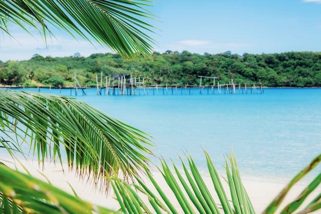 Folhas de coco na ilha.