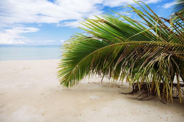 Folhas de coco na praia de areia.