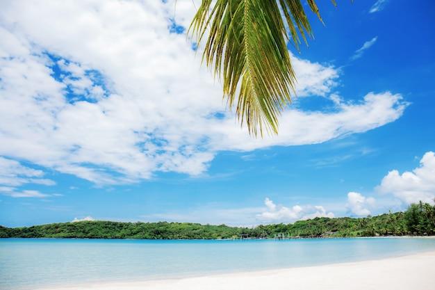 Folhas de coco no mar com céu azul na tailândia.