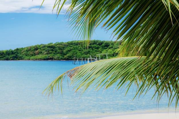 Folhas de coco no mar.