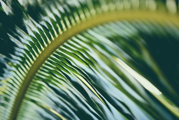 Folhas de coco / planta tropical de folha de palmeira verde fresco