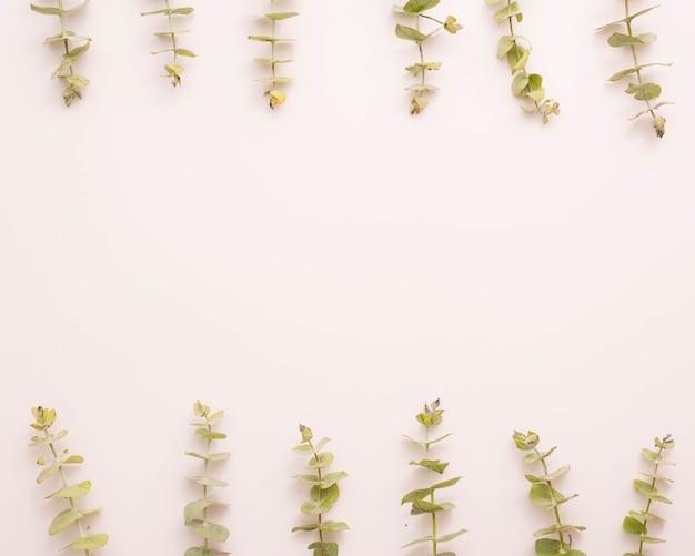 Folhas de eucalipto, dispostas em linha sobre fundo branco