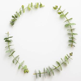 Folhas de eucalipto, dispostas em moldura circular sobre a superfície branca