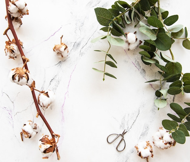 Folhas de eucalipto e flores de algodão