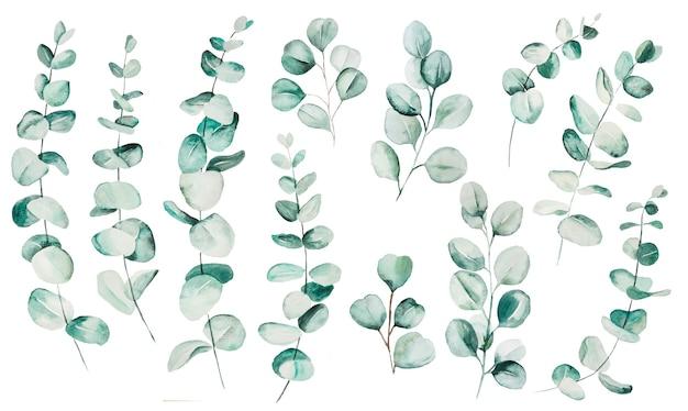 Folhas de eucalipto em aquarela definir ilustração. elementos para artigos de papelaria, convites, cartões, logotipos, padrões, adesivos