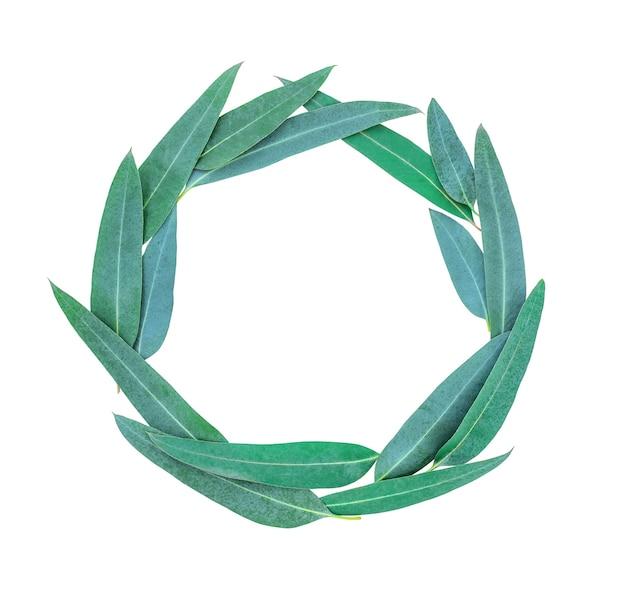 Folhas de eucalipto isoladas em uma superfície branca dispostas em um círculo