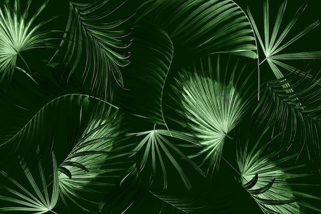 Folhas de fundo de palmeira
