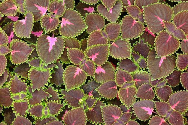 Folhas de fundo