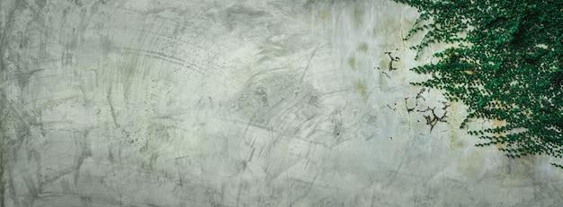 Folhas de hera verde na parede de cimento