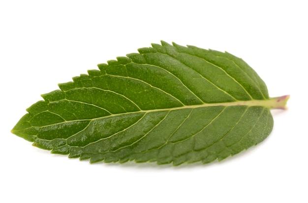 Folhas de hortelã em uma superfície branca isolada