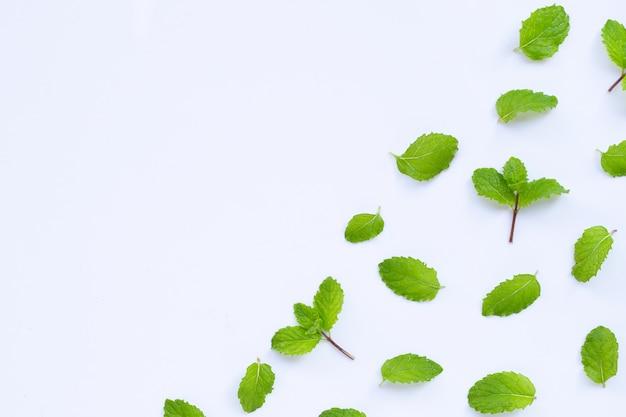 Folhas de hortelã fresca. copie o espaço