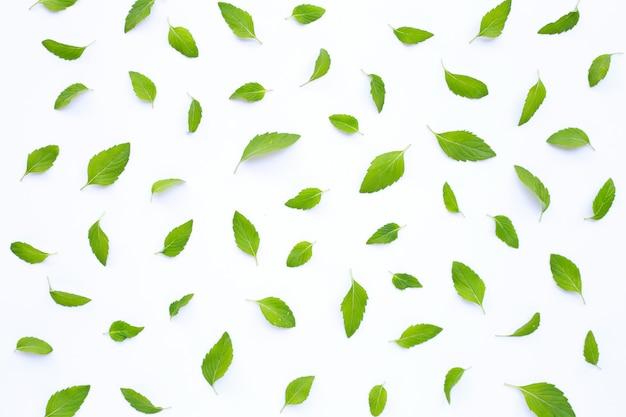Folhas de hortelã fresca em branco