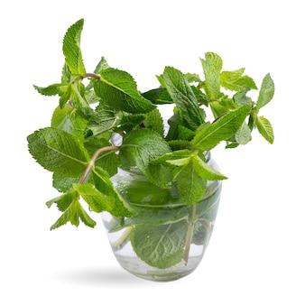 Folhas de hortelã fresca em um frasco de vidro isolado em uma superfície branca