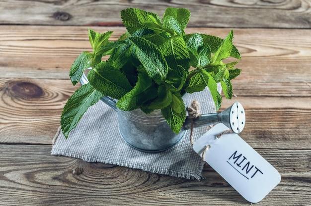Folhas de hortelã fresca em uma lata molhando do vintage em um fundo de madeira.