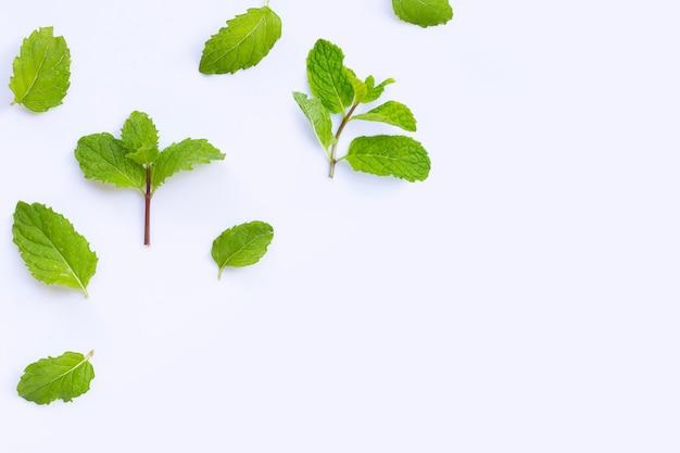Folhas de hortelã fresca isoladas na mesa branca. copie o espaço