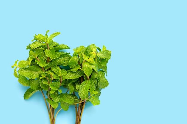 Folhas de hortelã fresca sobre fundo azul.