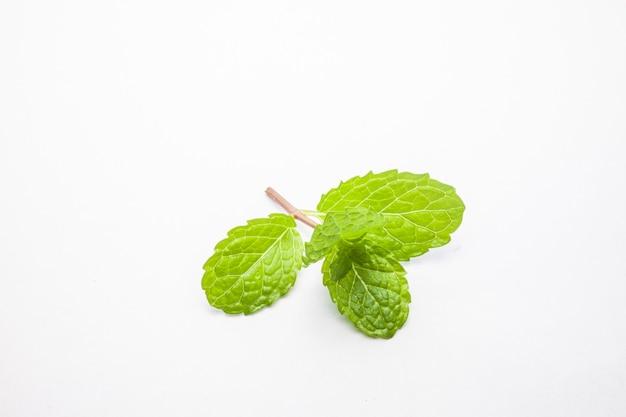 Folhas de hortelã isoladas em fundo branco