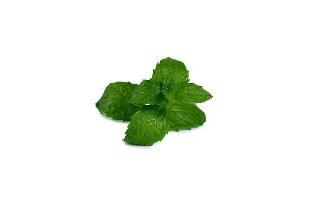Folhas de hortelã isoladas no branco. trajeto de grampeamento de hortelã. fotografia profissional de alimentos