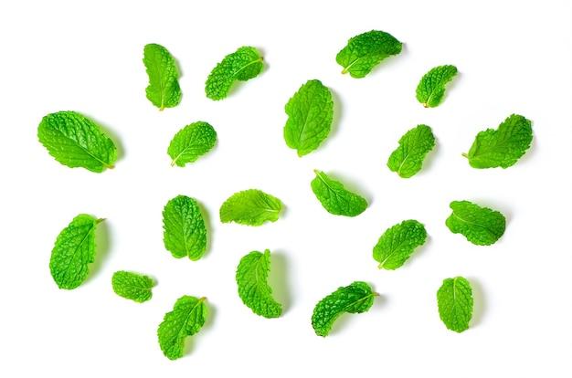 Folhas de hortelã isoladas no fundo branco, conceito de ervas e especiarias.