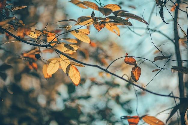 Folhas de laranja
