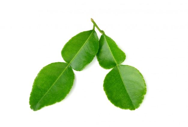 Folhas de lima kaffir isoladas em branco