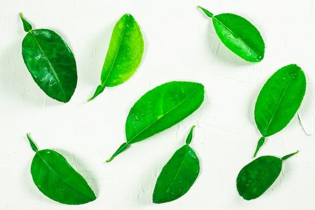 Folhas de limão em um fundo branco - traçado de recorte