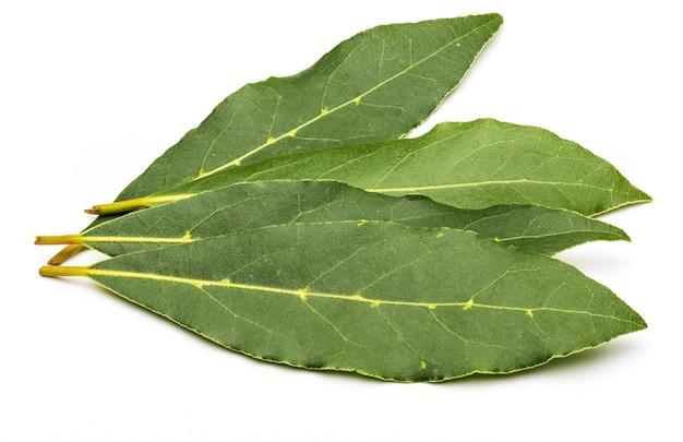 Folhas de louro frescas e secas, isoladas no fundo branco.