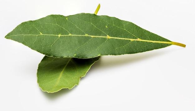 Folhas de louro frescas e secas.