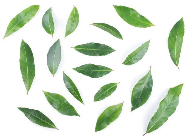 Folhas de louro isoladas no fundo branco