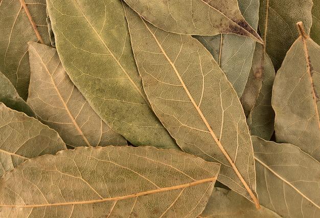 Folhas de louro secas fundo ou textura