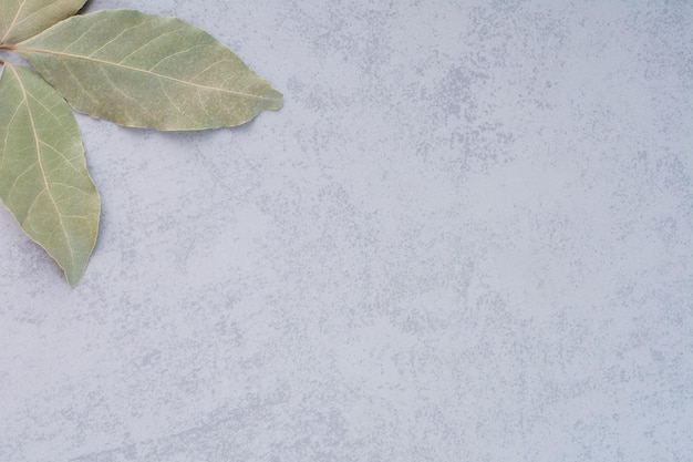 Folhas de louro verdes secas sobre fundo de concreto.