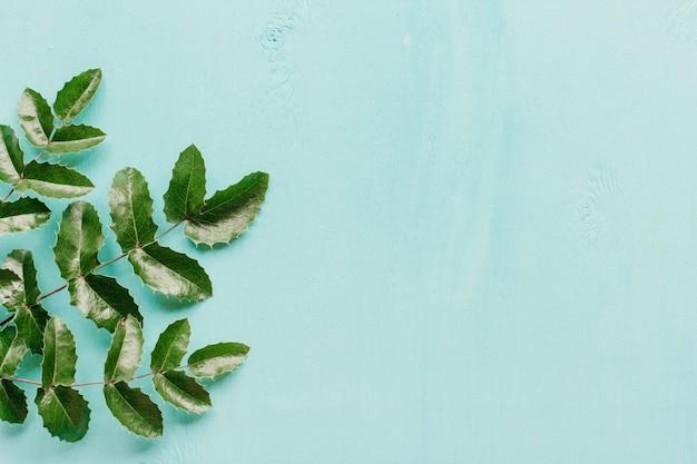 Folhas de mahonia em uma madeira azul