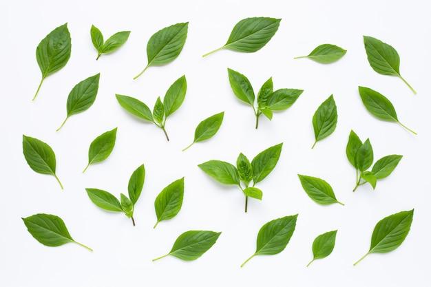 Folhas de manjericão doce em branco