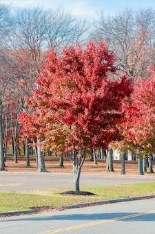 Folhas de maple outono mágicas.