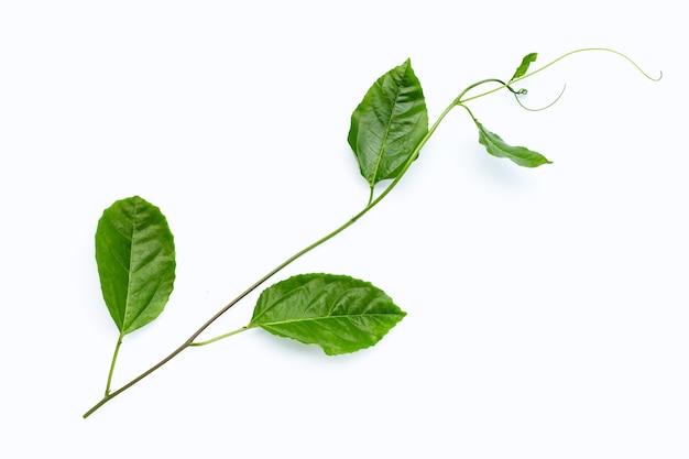 Folhas de maracujá em uma superfície branca