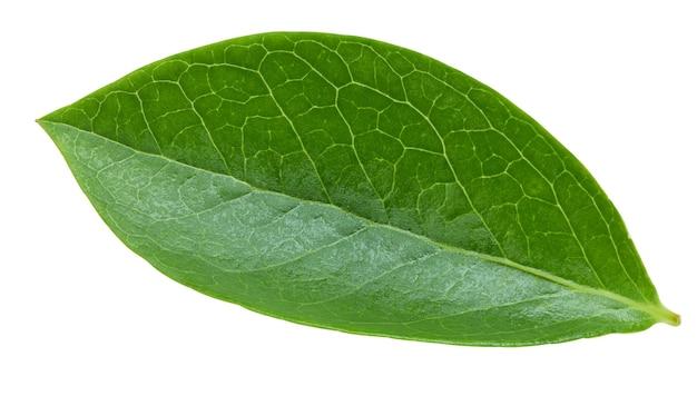 Folhas de mirtilo isoladas no fundo branco. trajeto de recorte de folhas