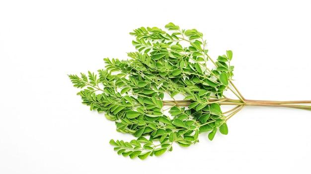 Folhas de moringa (ervas tailandesas) em um fundo branco.