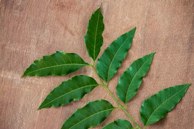 Folhas de nim usadas como remédio ayurvédico