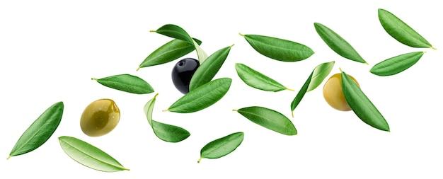 Folhas de oliveira caindo com azeitonas pretas e verdes